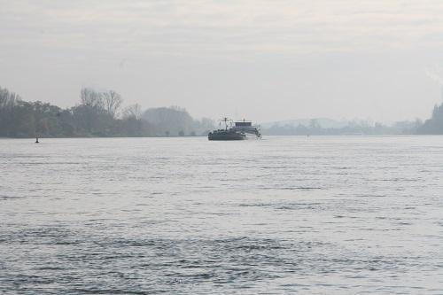 Welsangeln am Rhein